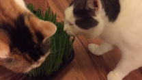 Quirky Cats Enjoy Some Grass