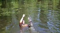 Tourist Video Captures Gator-Feeding Frolic
