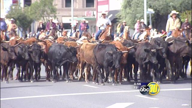 Cattle take over Robertson Blvd at the Chowchilla Western Stampede