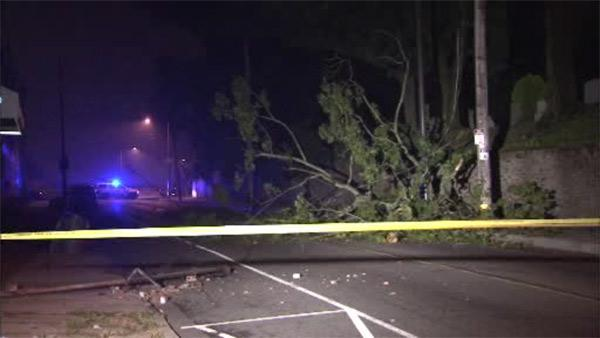 Tree crashes onto power lines in Hunting Park