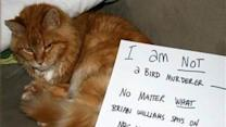 Cats Respond to Scathing Study