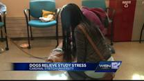 Therapy dogs head to college