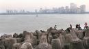 Bombay HC begins final hearing on pleas opposing coastal road project