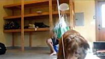 Ice Bucket Challenge With a Little Help From a Canine Friend