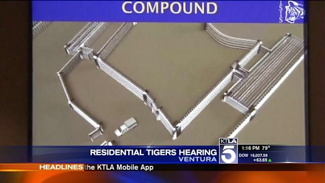 Plan to House Tigers for Movies Opposed by Malibu-Area Residents