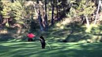 Mischievous Bear Cub Plays With Flag on Golf Course Green
