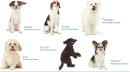 The story behind the dog photos on Amazon's Prime Day 404 error pages