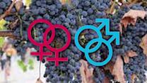 Gay-friendly wines come out in California