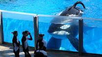 SeaWorld's bizarre PR draws more attention to 'Blackfish'