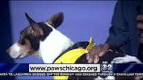 PAWS Pet Of The Week: Max