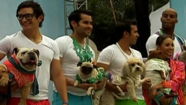 Doggy Fashion Show