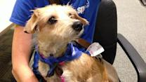Pet of the Week: Dachshund mix named Pinky