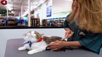 PetSmart Continues to Claw its Way Back