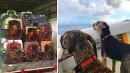 Virginian Charters Jet To Rescue 300 Pets Stranded On Virgin Islands After Irma
