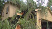 Storms cause damage in Brighton area
