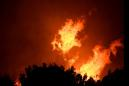 Fierce, frequent, climate-fueled wildfires may decimate forests worldwide