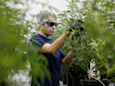 A $  10 billion marijuana producer just spun off its venture arm in the hopes it will become the 'Google Ventures of cannabis' (RIV)