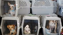 These are the airlines on which your pet is least likely to die