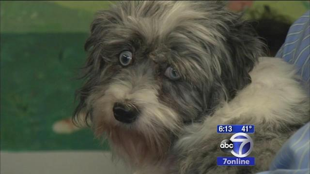 Miracle the dog ready to be adopted