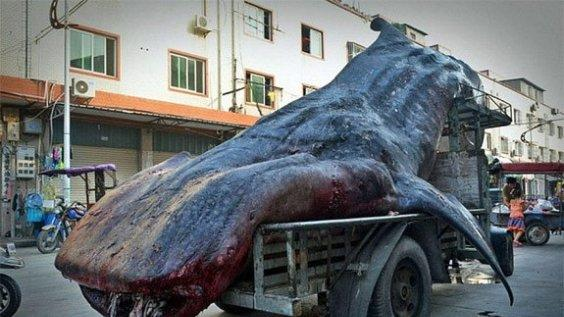 Truck drags 16 ft long whale in China goes viral