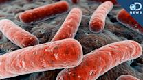 Why Bacteria Commit Suicide - DNews-AR