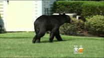 Parsippany Officials Warn Residents To Stay Away From Bears