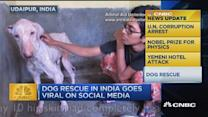 Dog rescue in India