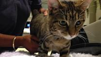 Pet of the Week: 2-year-old cat named Beya