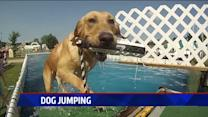 The Adorable Sport Of Dog Jumping