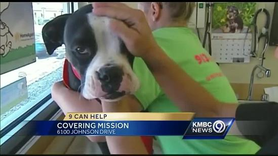 Boxer pup loses leg after getting snagged in fence