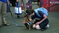 Therapy dogs calm travelers amid heightened security
