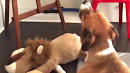 Chris Evans' Dog Howling 'The Lion Sleeps Tonight' With His Toy Lion Is Beyond Cute