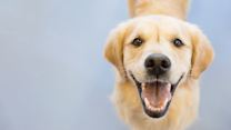 The Oregon Supreme Court Says Dogs Are People