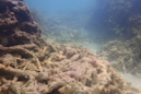 Coral reefs in Florida Keys hit hard this hurricane season, but there are signs of recovery