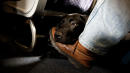Should emotional support animals be allowed on planes?