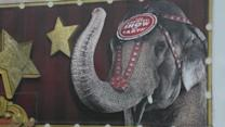 Ringling Bros. elephant shot in drive-by shooting