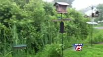 Birding experts concerned about lack of birds