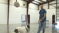 Making a Difference: Inmates train dogs in prison