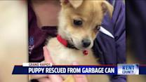 Woman Rescues Puppy Crying In A Garbage Can
