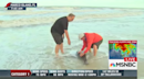 NBC reporter rescues two dolphins beached by Irma