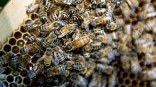 Bayer, Syngenta Clash With EU Over Bees Amid M&A Charm Offensive