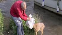 Volunteers rescue deer stuck in river