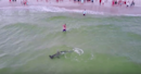 Drone Video Captures Hammerhead's Struggle With Fisherman