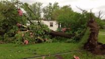 Trees Uprooted by Michigan Tornado