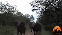 Two angry elephants unexpectedly charge a vehicle