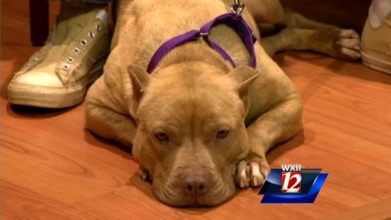 Pet Of The Week:Cappuccino and Gemma