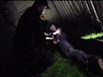 Police officers set dog on black man and say 'good boy, good boy' as it bites his leg