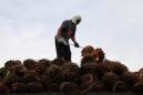 """Malaysia says allegations of forced labour in palm plantations is """"old issue"""""""