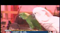Extreme Parrots featured on 'America's Got Talent'