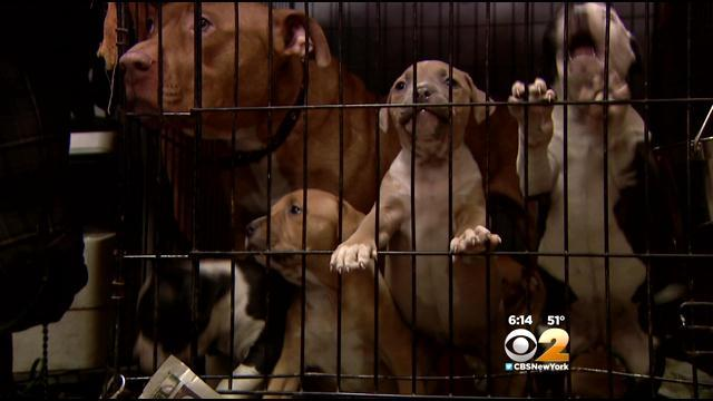 Queens Animal Shelter Forced To Closing Searching For New Homes For Pets